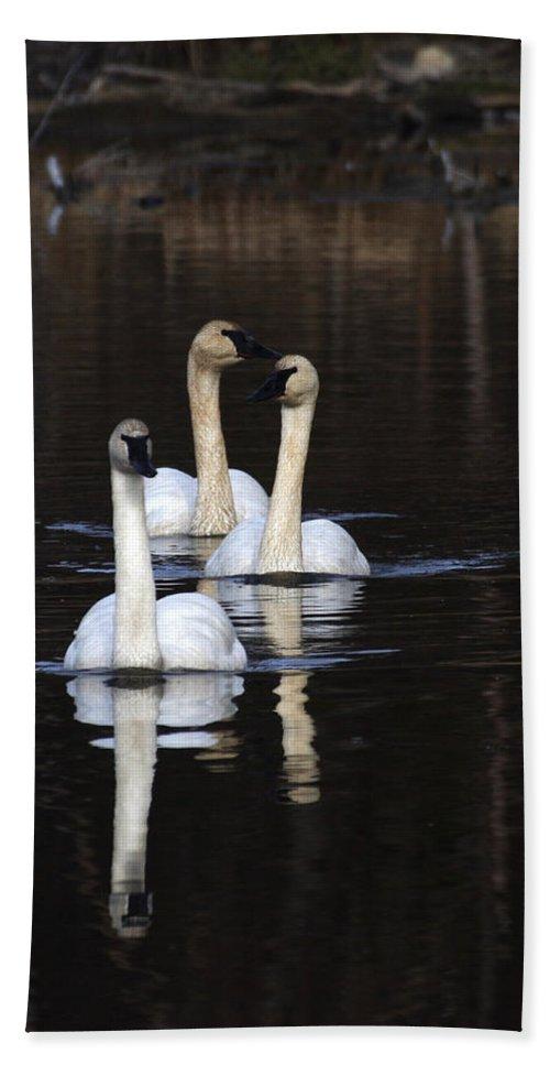 Alaska Hand Towel featuring the photograph Swans In A Row by Doug Lloyd