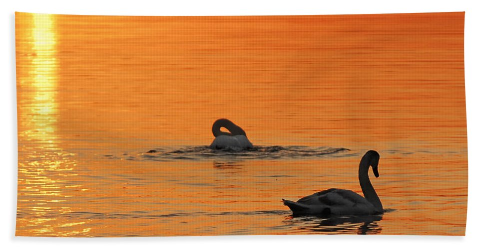 Swans At Dawn Bath Sheet featuring the photograph Swans In Early Light by Randall Branham