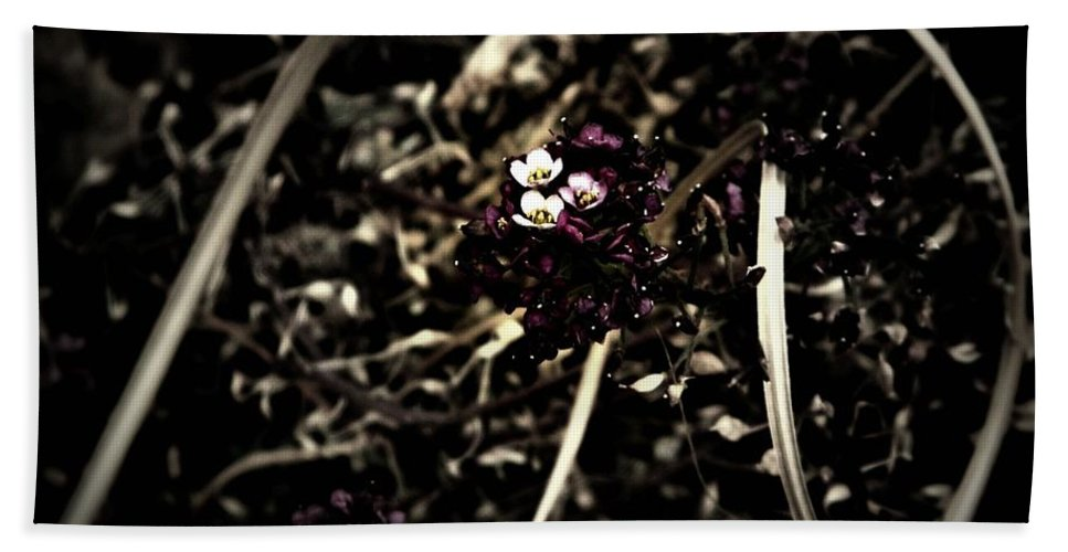 Earthy Bath Sheet featuring the photograph Sweet Alyssum by Chris Berry
