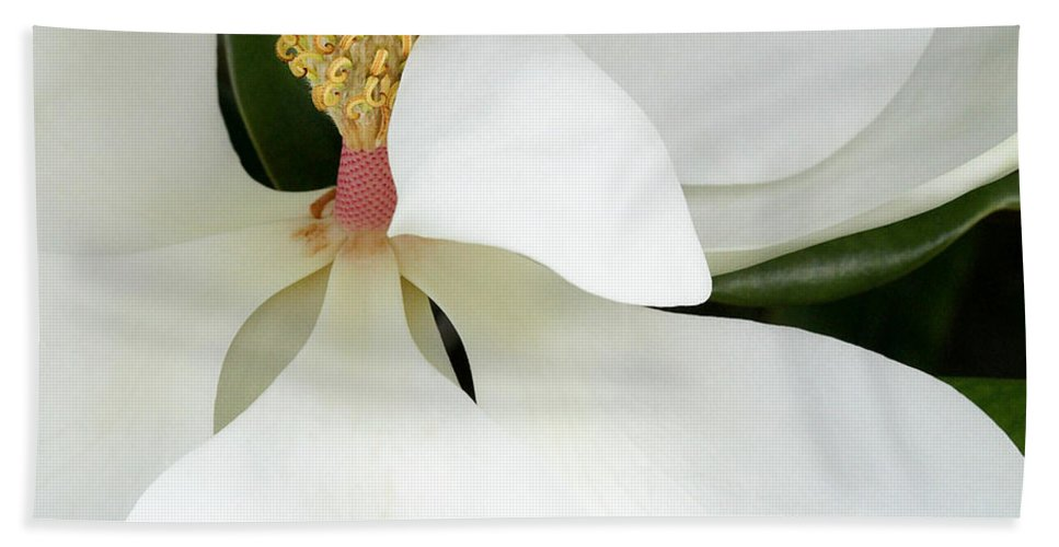 Landscape Hand Towel featuring the photograph Sweet Magnolia Flower by Sabrina L Ryan