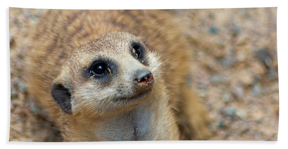 Meerkat Hand Towel featuring the photograph Sweet Meerkat Face by Carolyn Marshall