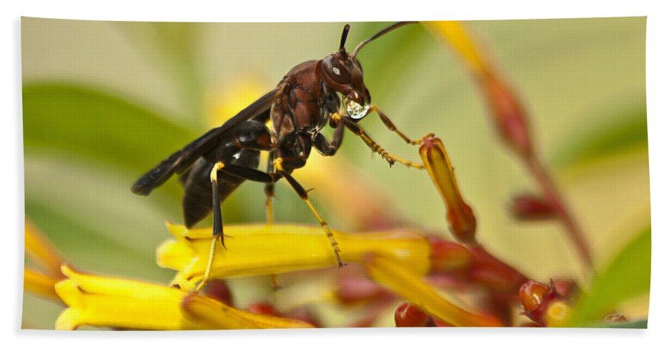 Wasp Bath Sheet featuring the photograph Sweet Morning Dew by Carolyn Marshall