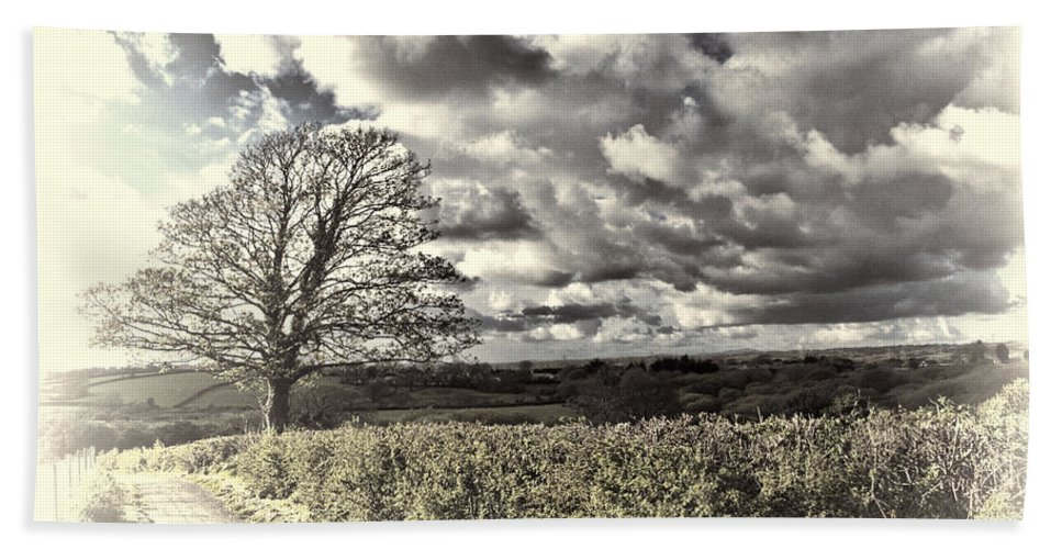 Sycamore Tree Bath Sheet featuring the photograph Sycamore Tree Cream by Steve Purnell