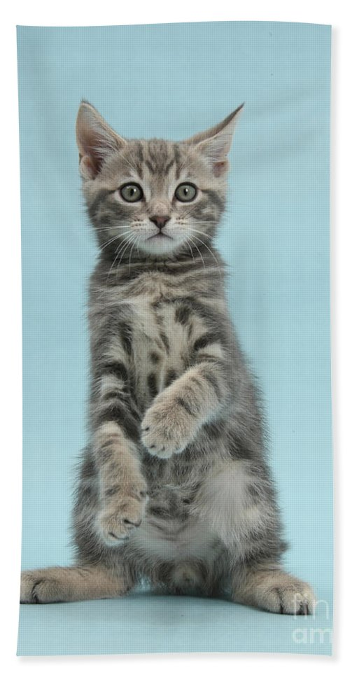 Nature Hand Towel featuring the photograph Tabby Kitten Sitting Up by Mark Taylor