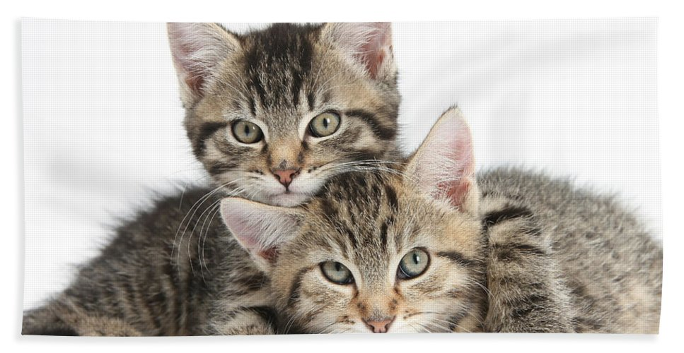 Animal Hand Towel featuring the photograph Tabby Kittens Cuddling by Mark Taylor