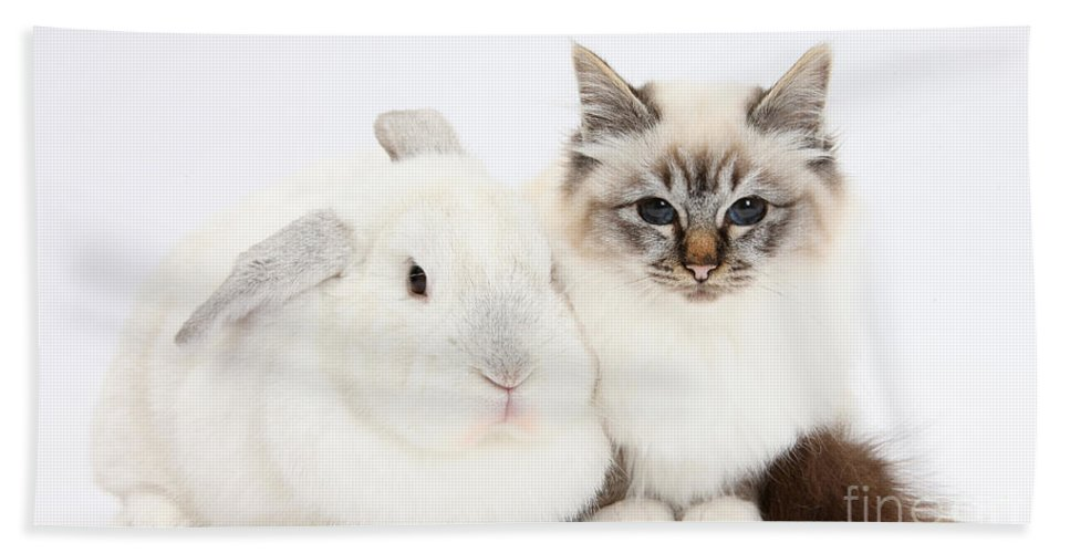 Nature Hand Towel featuring the photograph Tabby-point Birman Cat And White Rabbit by Mark Taylor