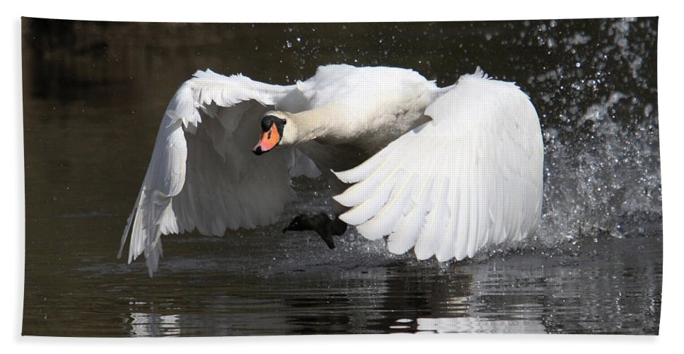 Swan Bath Sheet featuring the photograph Take Off by Mark Heywood