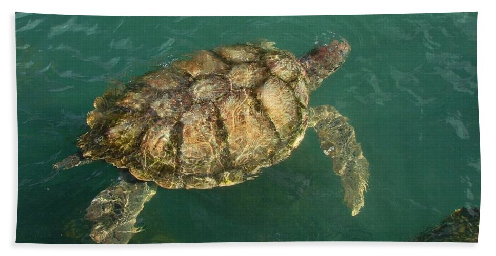 Seaturtle Bath Sheet featuring the photograph Taking It Easy by Margaret Bobb