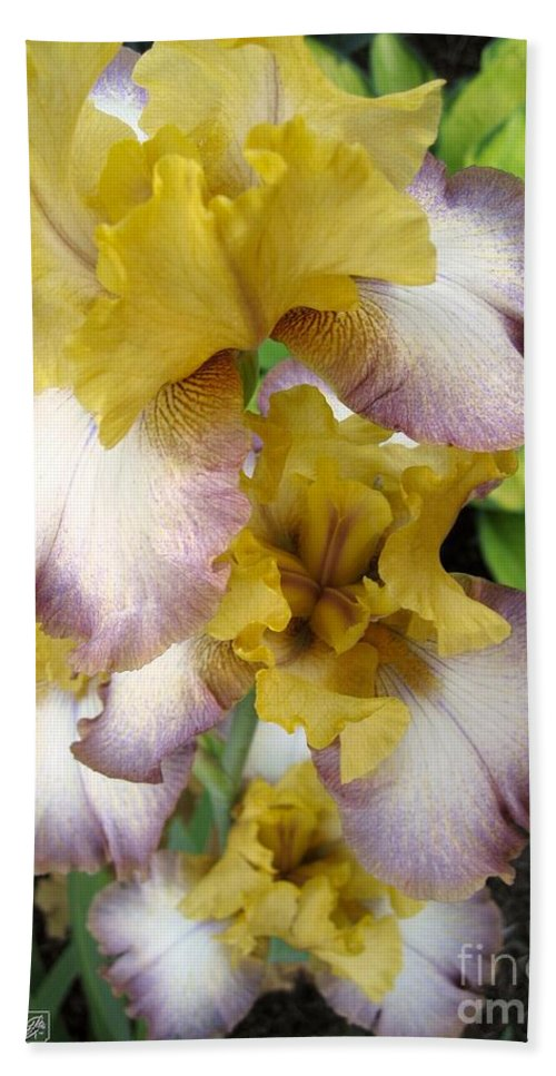 Bearded Iris Bath Sheet featuring the photograph Tall Bearded Iris Named Butterfingers by J McCombie