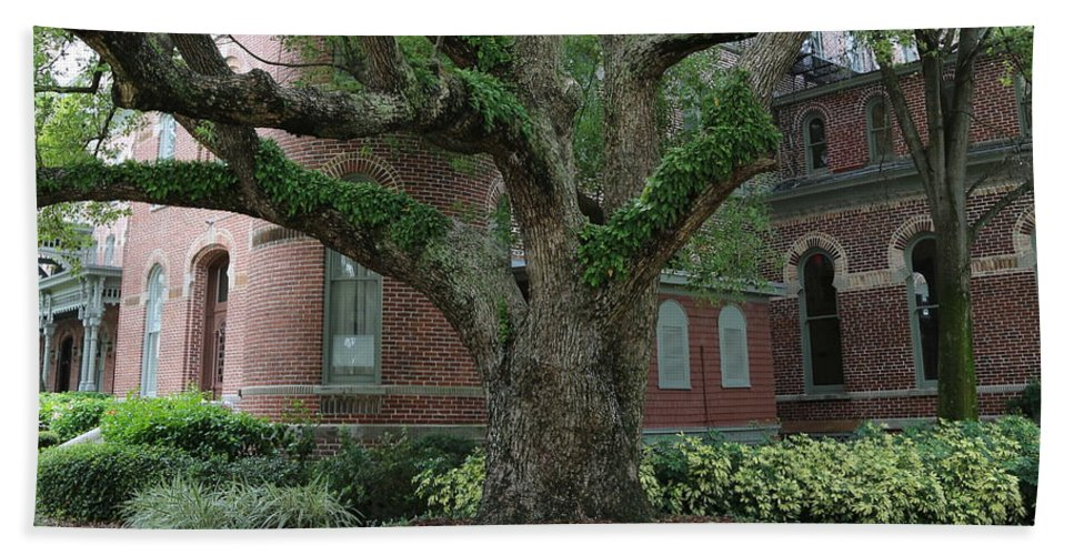 Tampa Hand Towel featuring the photograph Tampa Tree by Carol Groenen