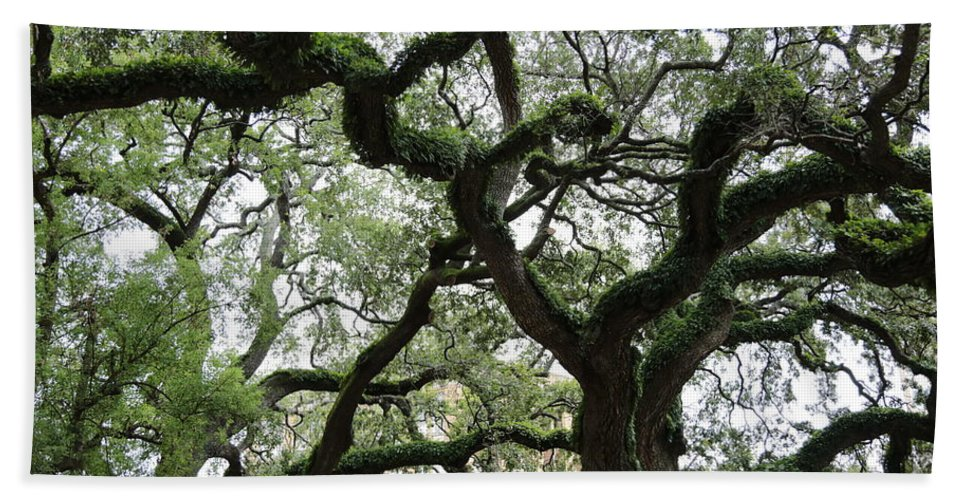 Trees Hand Towel featuring the photograph Tampa Trees by Carol Groenen