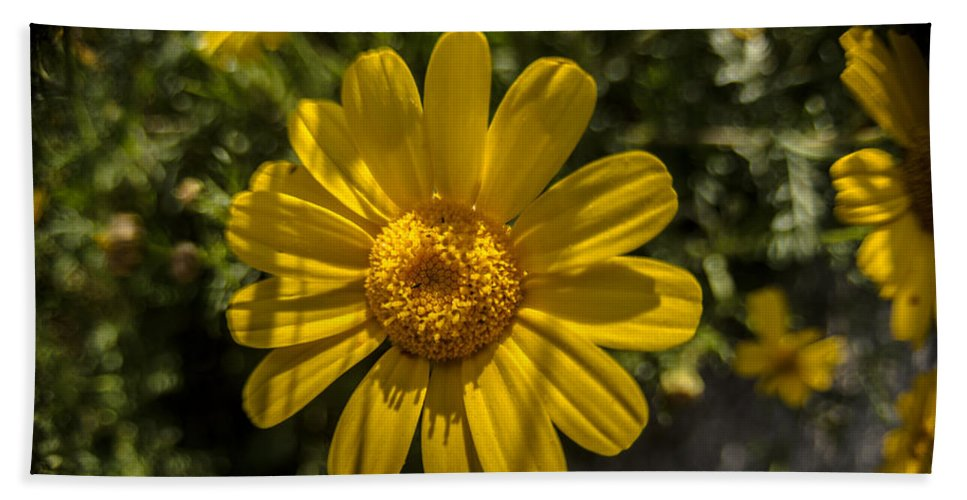 Background Hand Towel featuring the photograph Tanacetum by Michael Goyberg