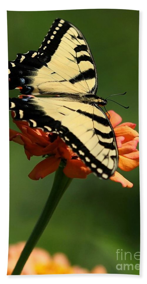 Piano Key Bath Sheet featuring the photograph Tantalizing Tiger Swallowtail Butterfly by Sabrina L Ryan