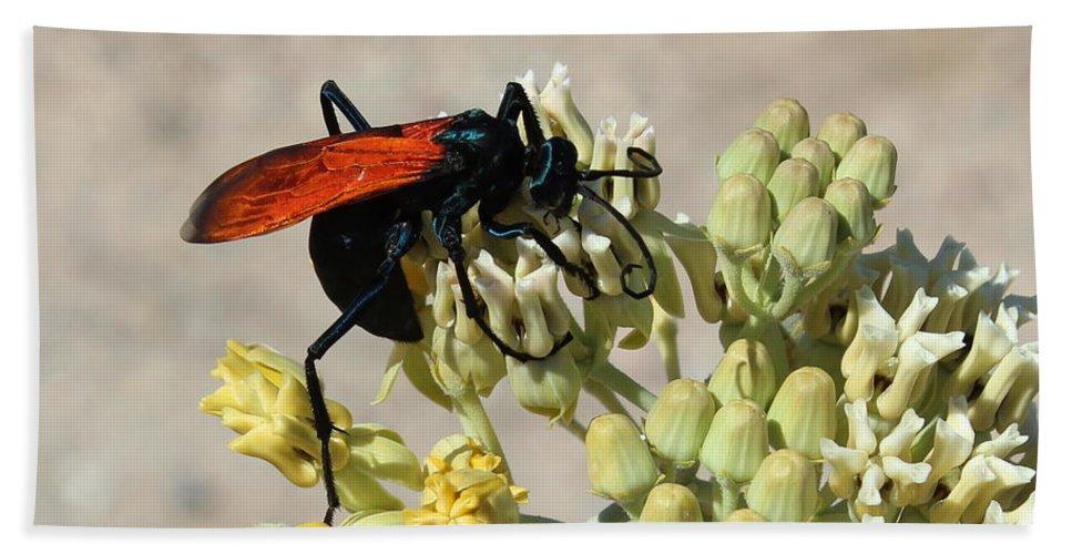 Tarantula Bath Sheet featuring the photograph Tarantula Hawk Wasp by Kume Bryant