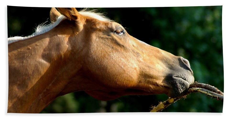 Horse Hand Towel featuring the photograph Tasty Branch by David Weeks