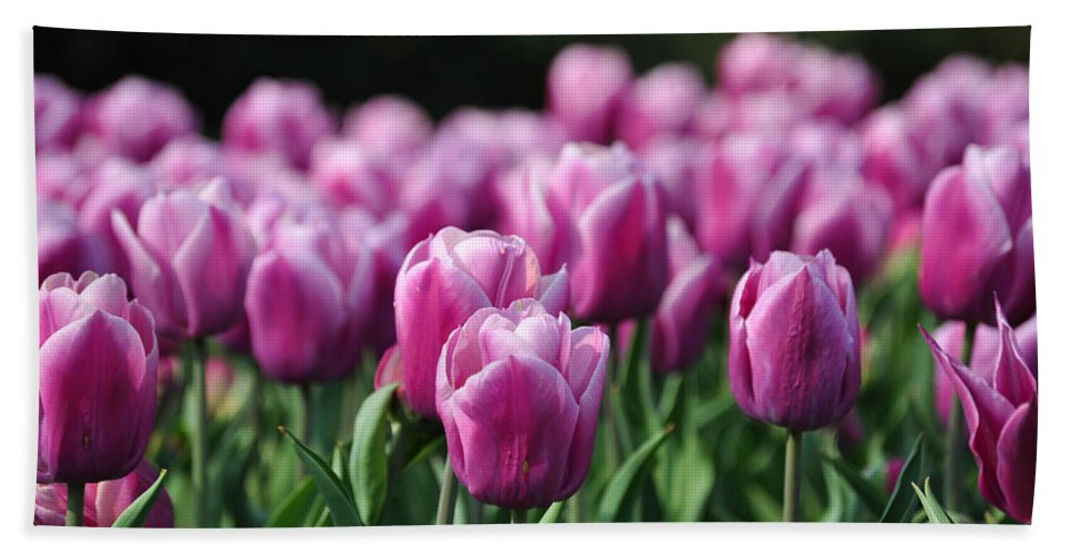 Tulip Bath Sheet featuring the photograph Taylor's Tulips by Trish Tritz