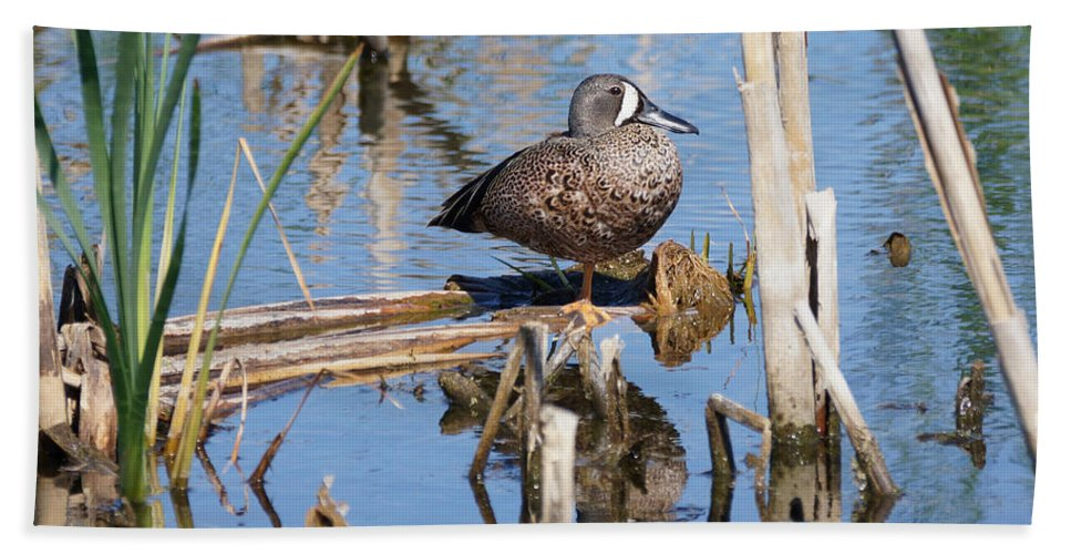 Teal Hand Towel featuring the photograph Teal Standing On One Leg by Lori Tordsen