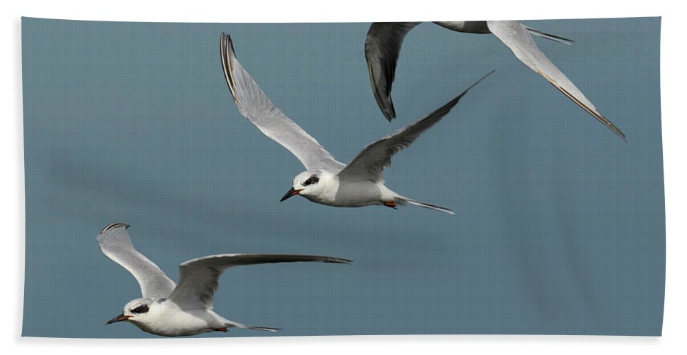 Tern Bath Sheet featuring the photograph Terns In Formation by Dave Mills