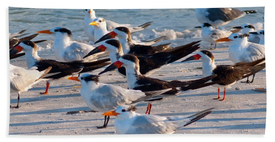 Terns Hand Towel featuring the photograph Terns by Stephen Whalen