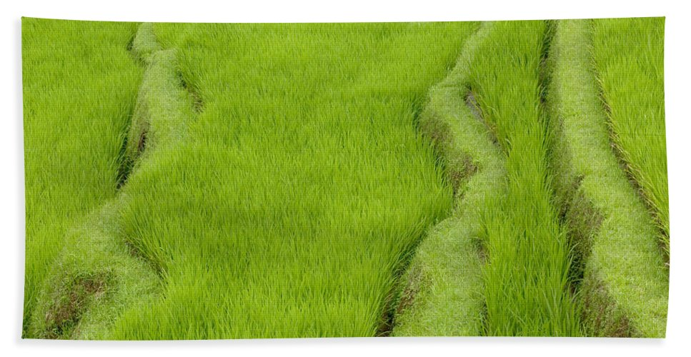 Mp Hand Towel featuring the photograph Terraced Rice Paddy, Ubud Area, Bali by Cyril Ruoso