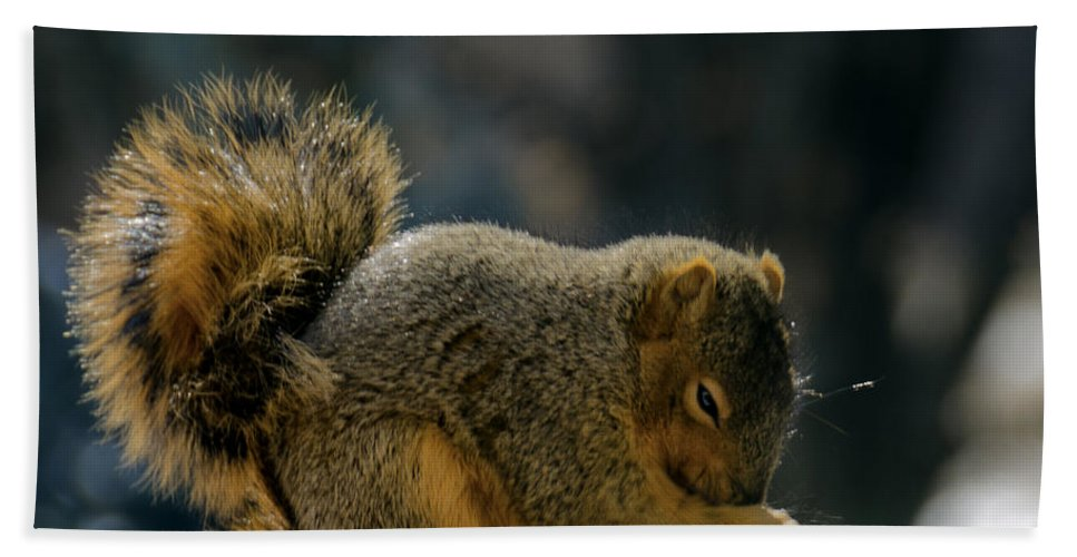 Usa Bath Sheet featuring the photograph Thank You For The Nuts by LeeAnn McLaneGoetz McLaneGoetzStudioLLCcom