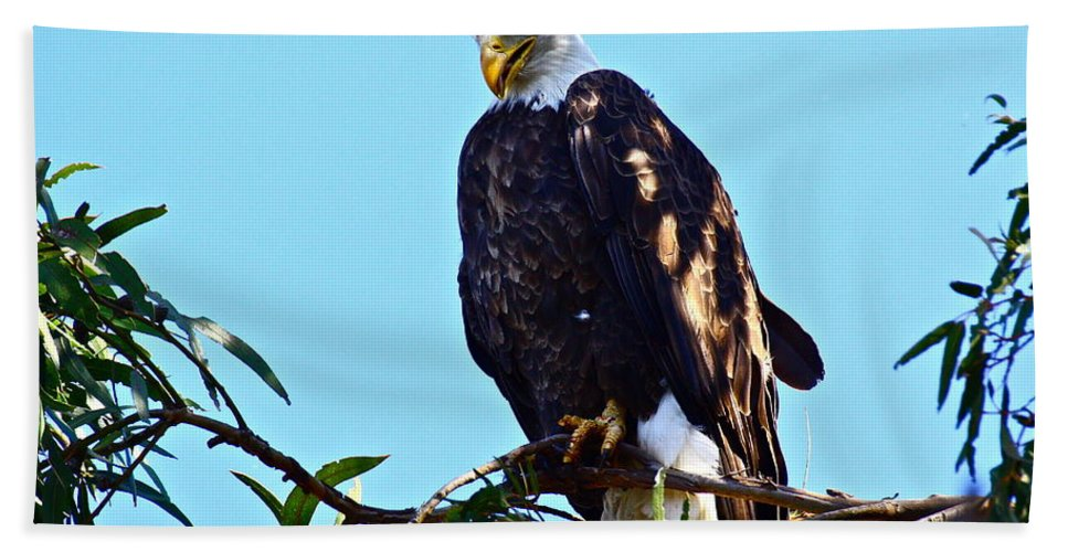 Birds Bath Sheet featuring the photograph That Eagle Stare by Diana Hatcher