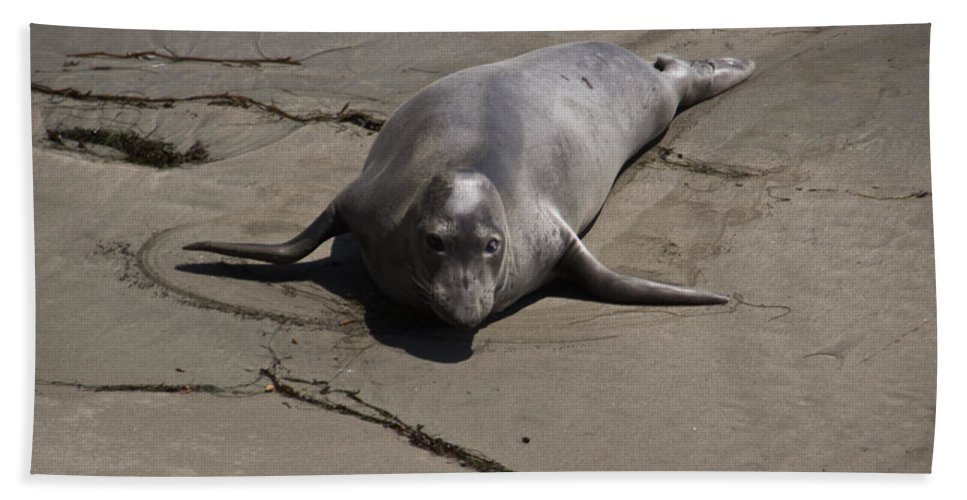 Elephant Seal Bath Sheet featuring the photograph That Face by Heidi Smith