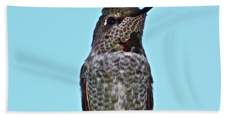 Birds Bath Sheet featuring the photograph The Bully by Diana Hatcher