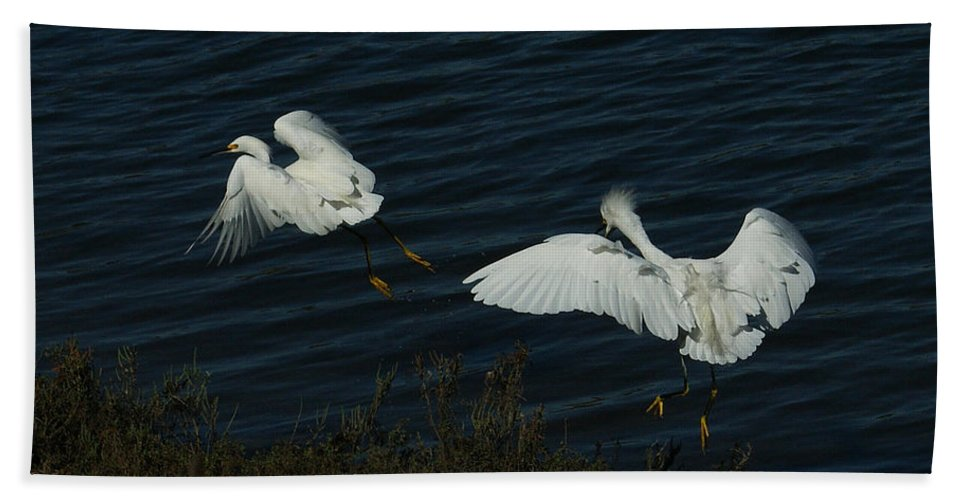 Birds Hand Towel featuring the photograph The Chase by Ernie Echols