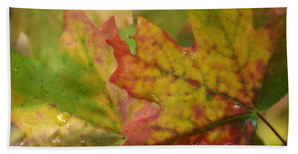 Maple Leaves Bath Towel featuring the photograph The Colors Of Fall by Saija Lehtonen