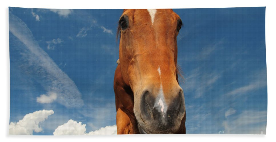 The Curious Horse Hand Towel featuring the photograph The Curious Horse by Paul Ward