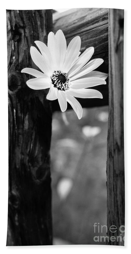 Flower Hand Towel featuring the photograph The Flower Bw by Mike Nellums