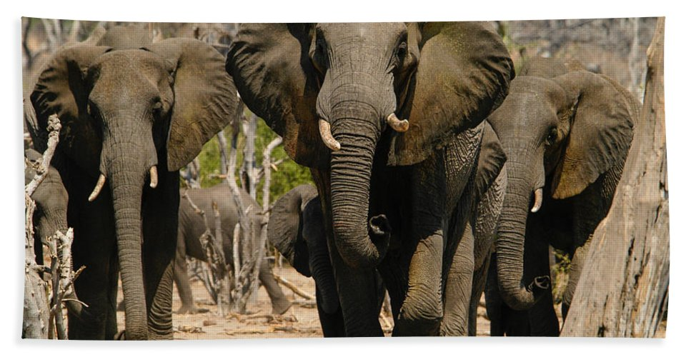 Action Hand Towel featuring the photograph The Herd by Alistair Lyne