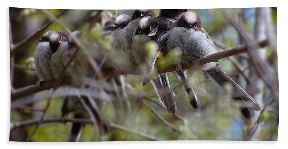 Long Tailed Tits Hand Towel featuring the photograph The Huddle by Gavin Macrae