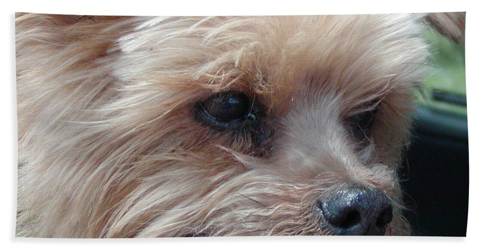 Roena King Bath Sheet featuring the photograph The Late Rocky by Roena King