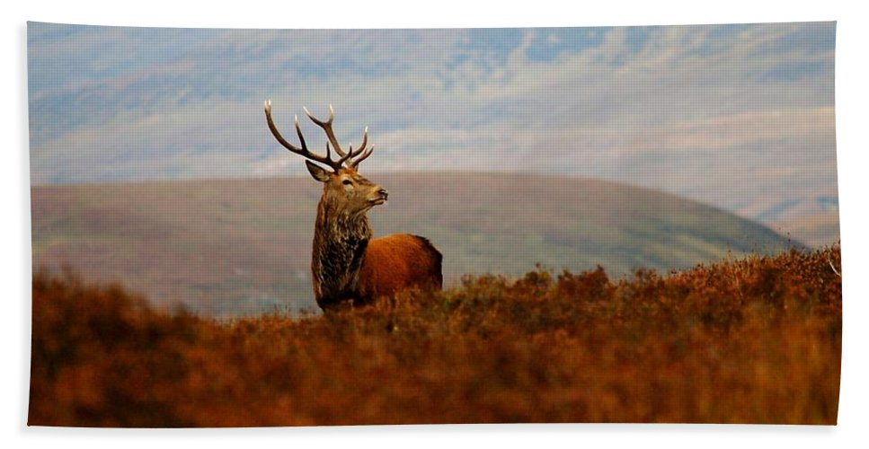 Red Deer Stag Hand Towel featuring the photograph The Monarch by Gavin Macrae