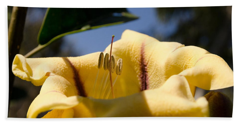 Agricultural Hand Towel featuring the photograph The New Seeds by Michael Goyberg