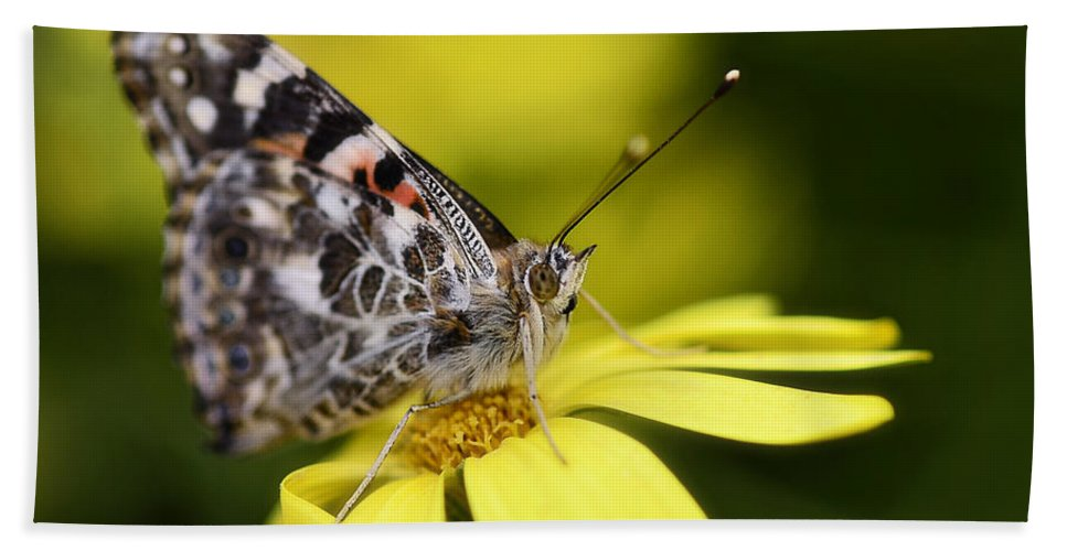 Painted Lady Butterfly Bath Towel featuring the photograph The Painted Lady And The Daisy by Saija Lehtonen