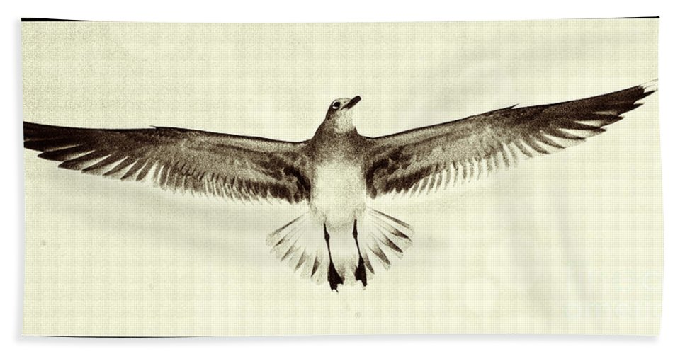 Beach Bath Sheet featuring the photograph The Perfect Wing by Jim Moore