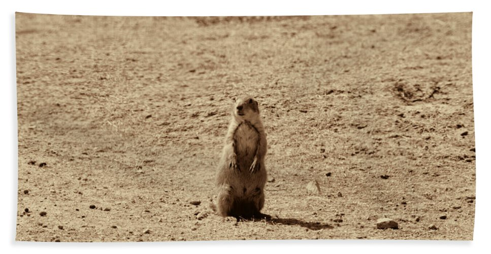 The Prairie Dog Hand Towel featuring the photograph The Prairie Dog by Douglas Barnard