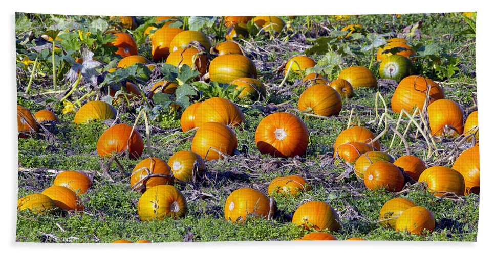 Pumpkin Hand Towel featuring the photograph The Pumpkin Patch by Sharon Talson