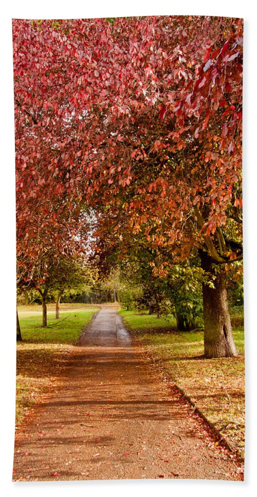 Autumn Bath Sheet featuring the photograph The Red Path by Dawn OConnor