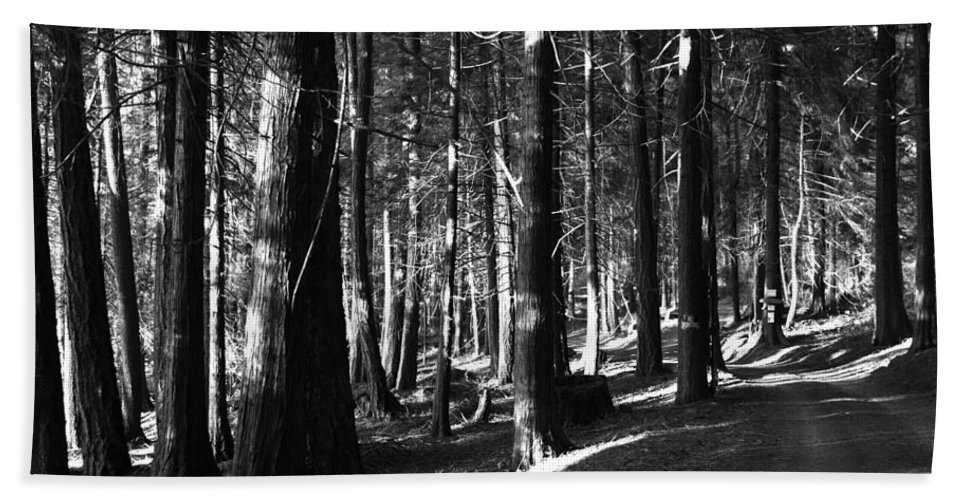 Forest Hand Towel featuring the photograph The Road In by Lorraine Devon Wilke