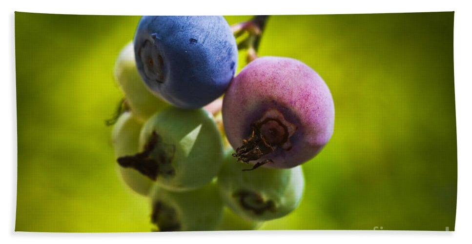 Blueberry Hand Towel featuring the photograph The Same Bush by Kim Henderson