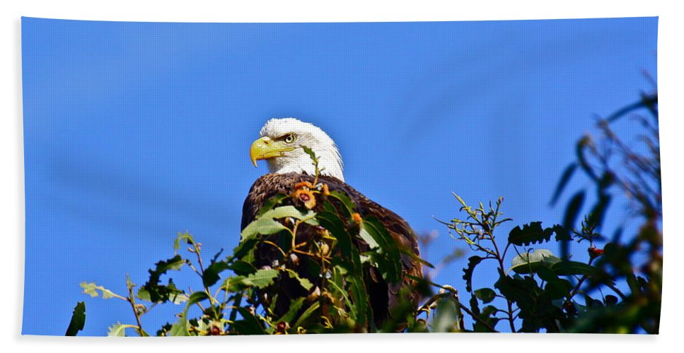 Birds Hand Towel featuring the photograph The Sentinel by Diana Hatcher
