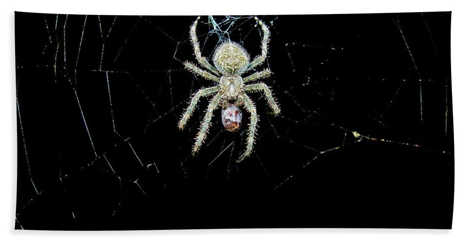 Spider Bath Sheet featuring the photograph The Spider by Sherman Perry