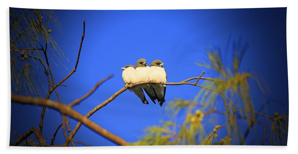 Swallows Hand Towel featuring the photograph The Three Musketeers by Douglas Barnard