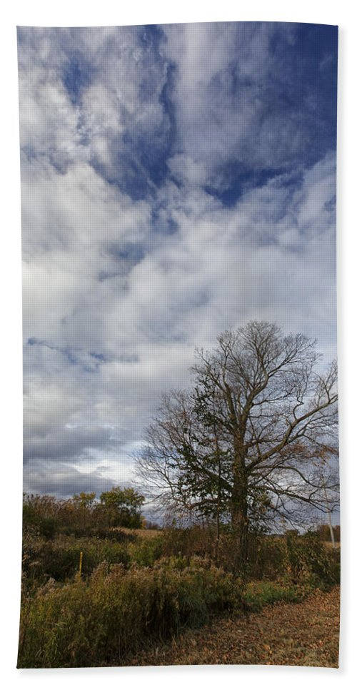 Tree Hand Towel featuring the photograph The Tree At The Side Of The Road by Rick Berk