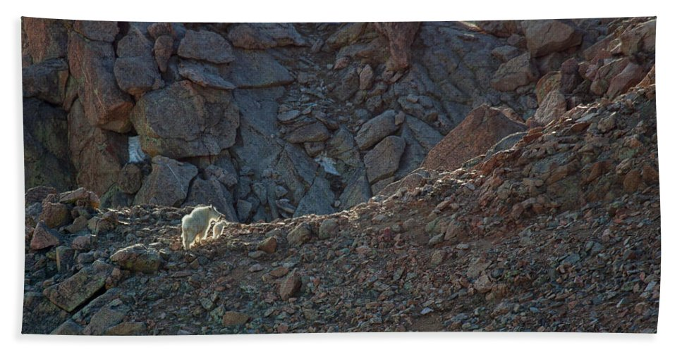 Mountain Goats; Posing; Group Photo; Baby Goat; Nature; Colorado; Crowd; Baby Goat; Mountain Goat Baby; Happy; Joy; Nature; Brothers Bath Sheet featuring the photograph The Uphill Road by Jim Garrison