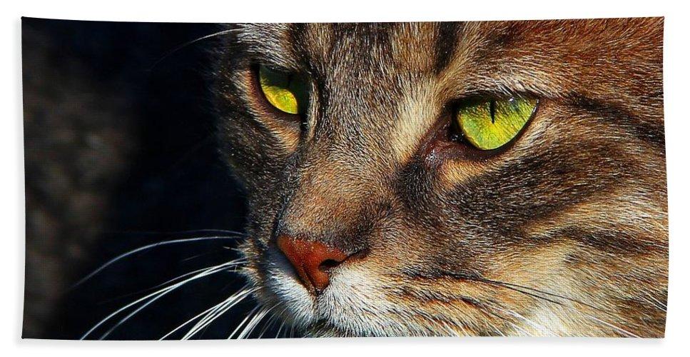 Cats Bath Sheet featuring the photograph The Watcher by Davandra Cribbie